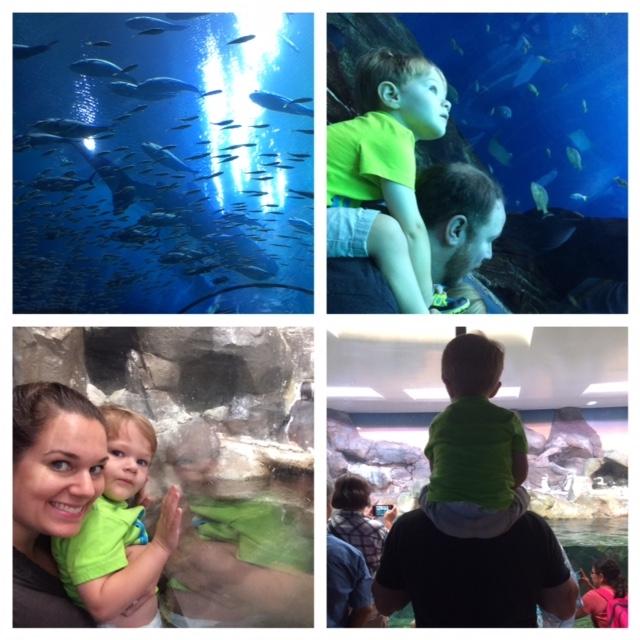 Georgia Aquarium Visit Information