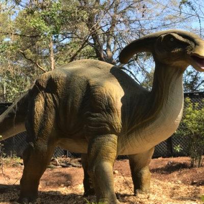 New Dinosaur Explore at Stone Mountain Park