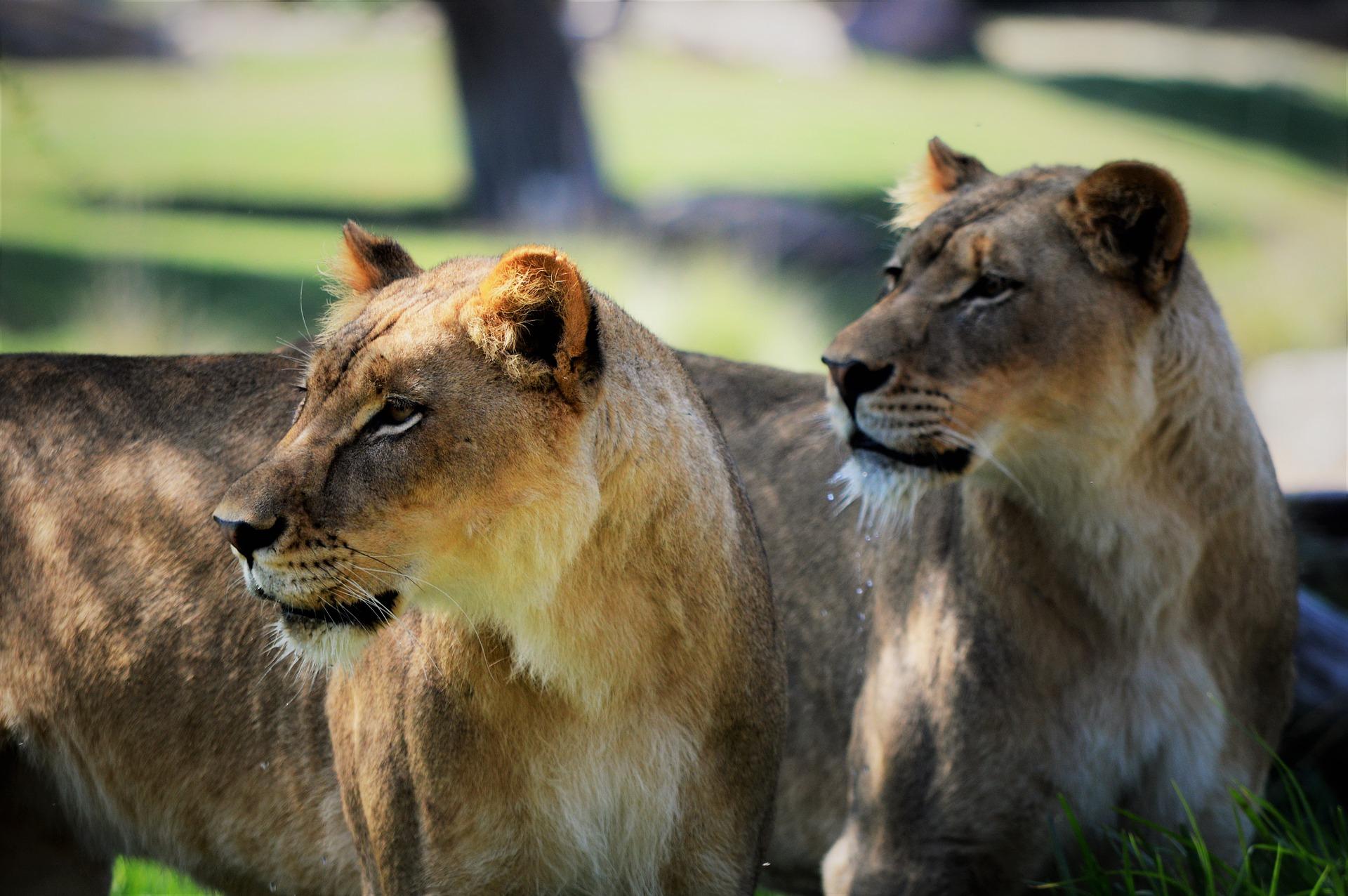 family-friendly San Diego, visit San Diego, San Diego with kids, San Diego zoo