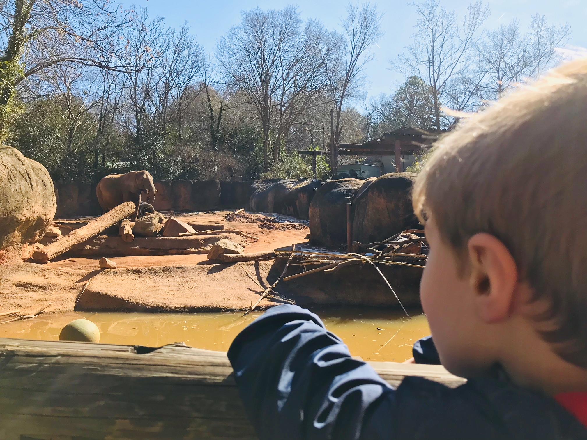 Zoo Atlanta, Atlanta Zoo, Atlanta Family Entertainment, Atlanta Kids Activities